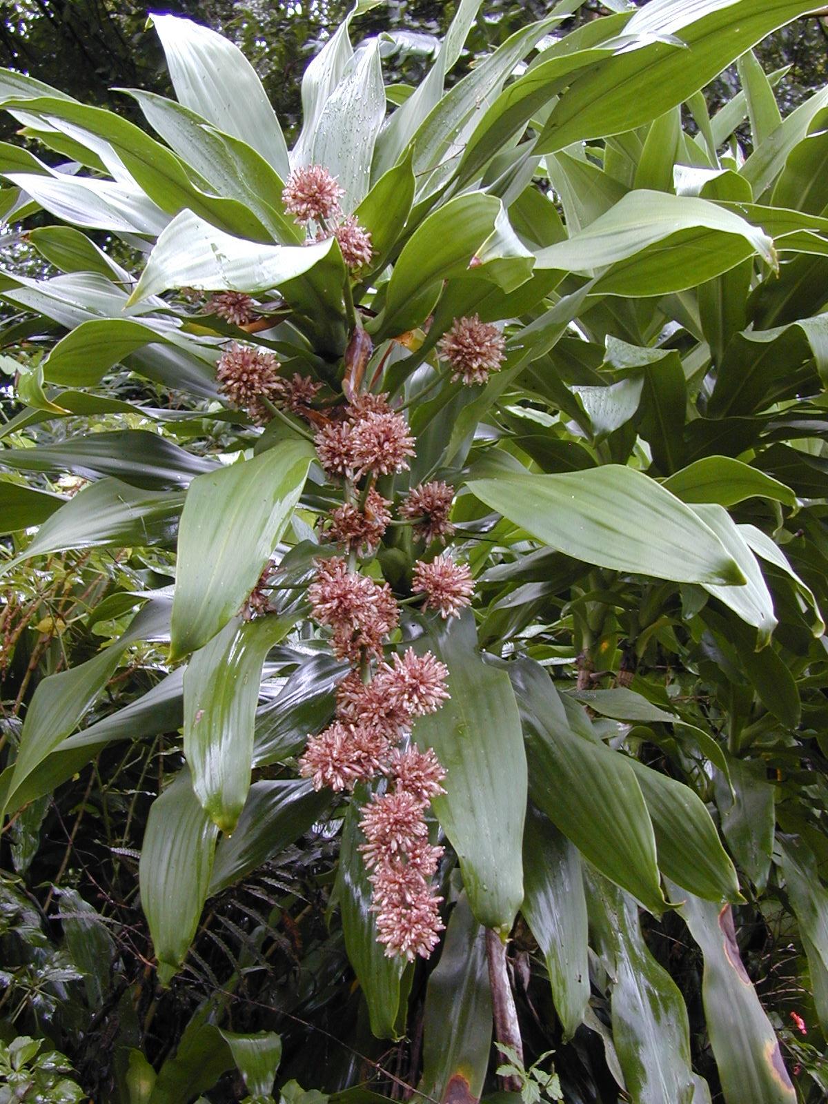 Especie de hojas verdes con flores