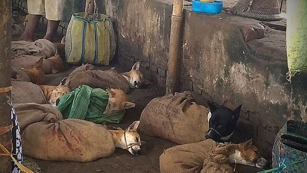 В Индии спасли собак, которых собирались убить и съесть