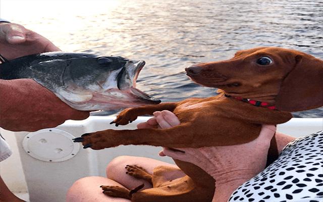 Hayvanların En Komik Halleri - Yüzünüzü Güldürecek 11 Hayvan Resmi