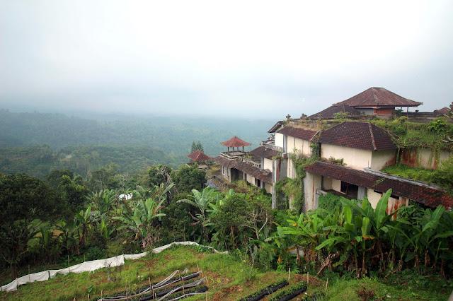 Vue sur les rizières d'un warung