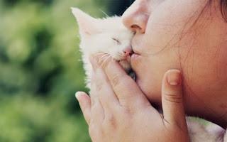 Mencium Kucing