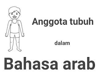 anggota tubuh dalam bahasa arab