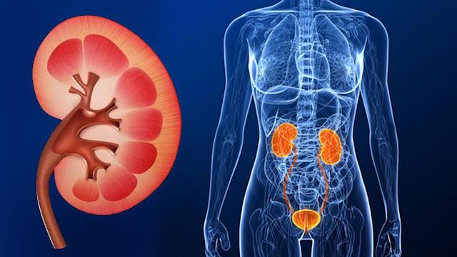 Cara mencegah dan mengobati penyakit ginjal