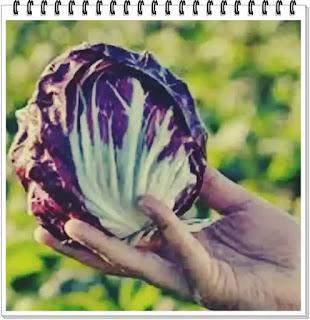 wiki pareri legume italienesti pentru diete de slabire