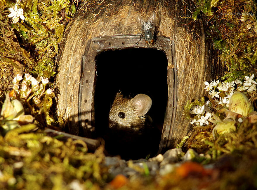 A Man Found A Mice Family In His Garden And Built An Amazing Miniature Village For Them