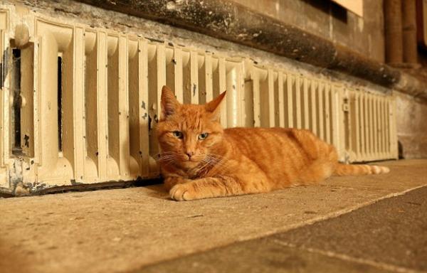 louis cat
