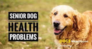 Common health problems in senior or older dog, dog health problems and treatment, treatment for dog health