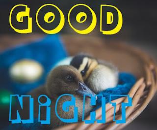 good night cute bird images