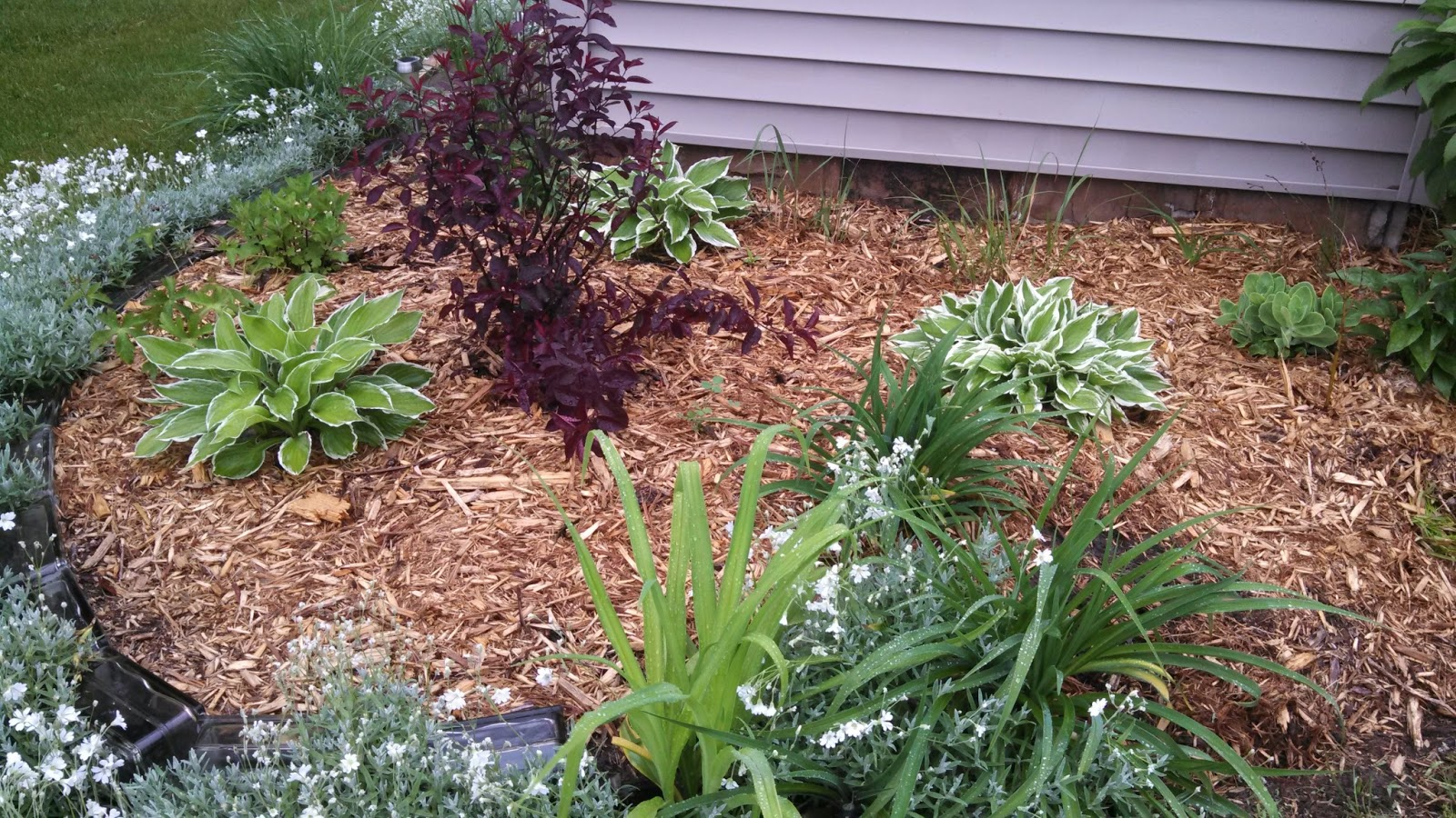Designs By Brenda At On The Right Path Designs Hostas The Art Of