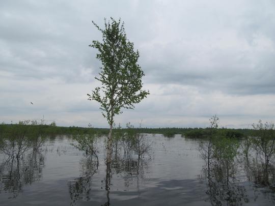 Весенний паводок