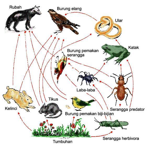 Rantai Makanan dalam Ekosistem dan Tipe - Tipe Rantai Makanan
