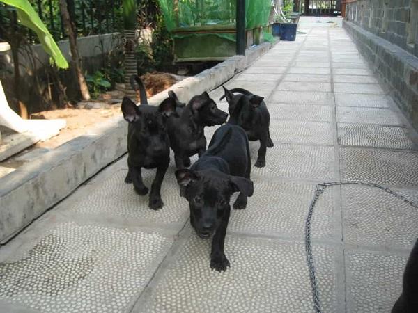 Chó đen chạy vào nhà điềm báo tốt hay xấu, đánh con gì, đánh lô đề số mấy ?