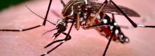 Beginilah Kasus Chikungunya Yang Terjadi Di Amerika