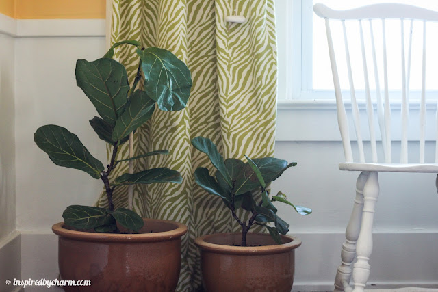 fiddle fig tree care instructions