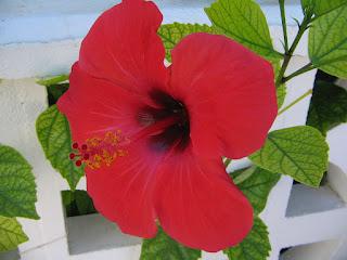 flor en la Zenia (Alicante, España)