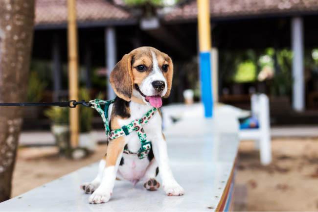 Amiplay smycze automatyczne dla psa