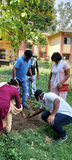 tree-plantation-jamshedpur