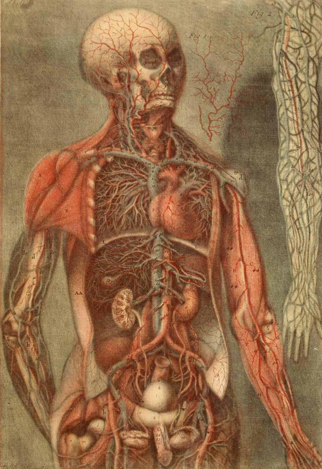Schön Menschliche Anatomie Und Physiologie Laborhandbuch 10. Ausgabe ...