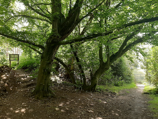 The permissive path on the left leading to Wain Wood, mentioned in point 10 below  Image by Hertfordshire Walker released via Creative Commons BY-NC-SA 4.0