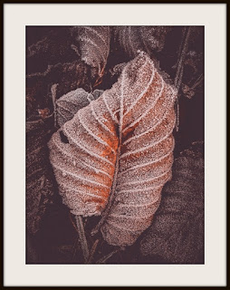 plakat z liściem, plakat z liśćmi, plakat zimowy, plakat szron, plakat zima, plakat roślinny, plakat przyrodniczy, plakat A3, plakat pionowy A3, tryptyk z liśćmie, tryptyk z fotografią przyrodniaczą
