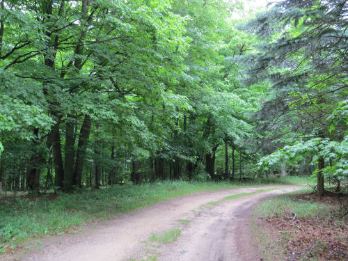 dirt road with trees