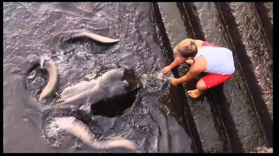 Boy and Friendly Manta Ray Develop Unlikely Friendship