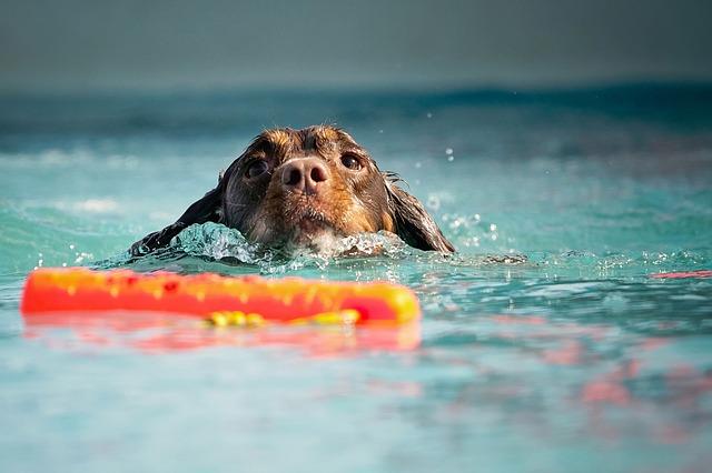 pet bathing ideas of animal lovers