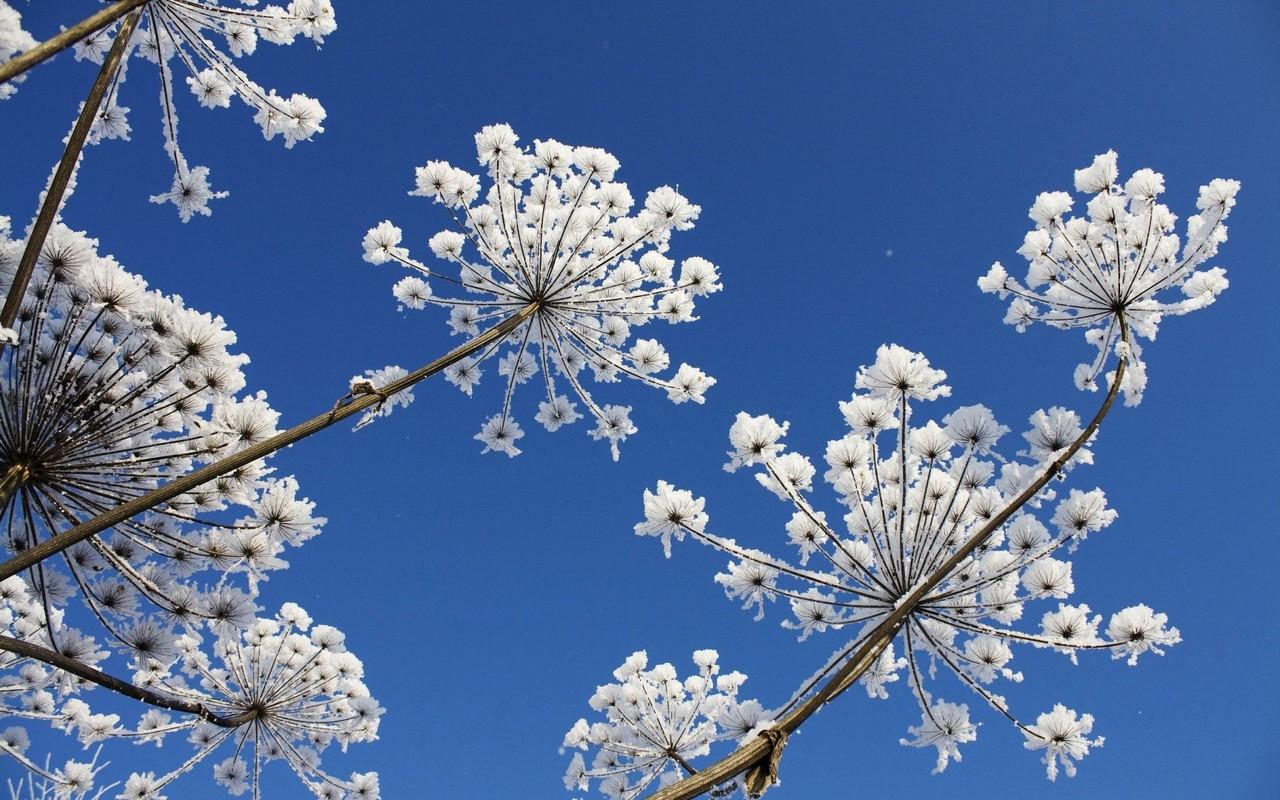 HD PC Desktop Wallpapers: Best Flower In The Sky