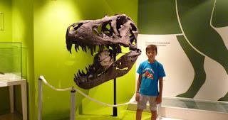 Museo Paleontológico de Elche.