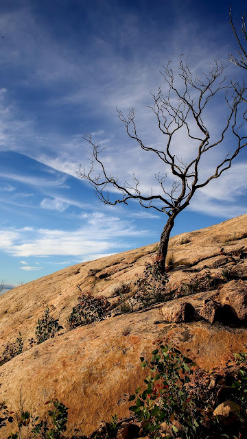 Wallpaper of only dry tree on the rock free HD