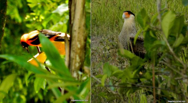 Bom destino de viagem para abril: Pantanal