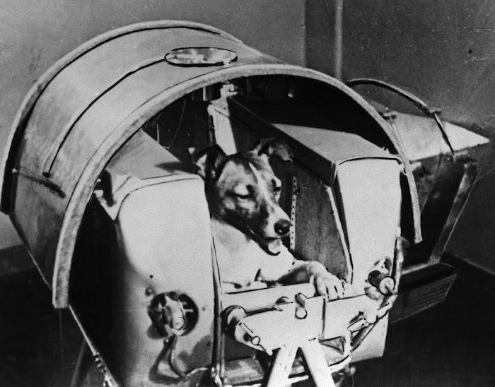 Chó Laika ngồi trong khoang chứa của vệ tinh Sputnik 2. Hình ảnh: Getty Images.