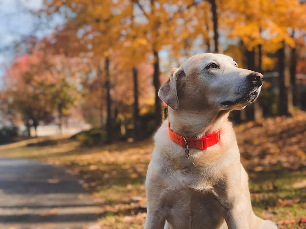 Download Beautiful wallpaper of a dog