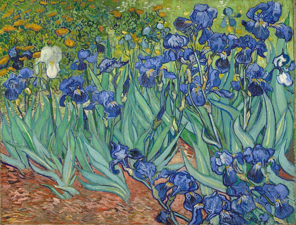 Francja Sladami Vincenta Van Gogha A K A C J O W Y B L O G W Podrozy W Kuchni I Wsrod Ptakow