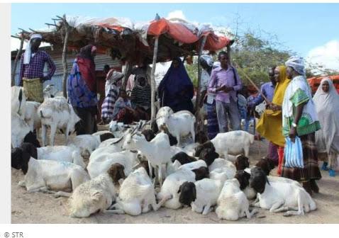 Restricted Hajj hits Somalia's farm animals, economy The annual Muslim