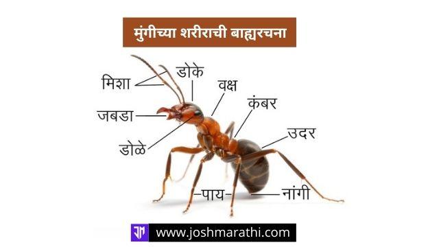 काळ्या मुंग्या Black Ants का चावत नाहीत ? Interesting Facts