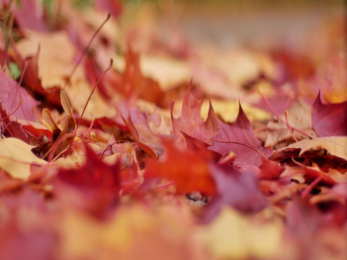 Herbstfarben,
