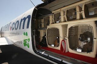 Viajar con perros a España en avion. Permisos para viajar con mascotas Brexit. Restricciones del Brexit para las mascotas