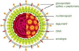 obat herpes simplex