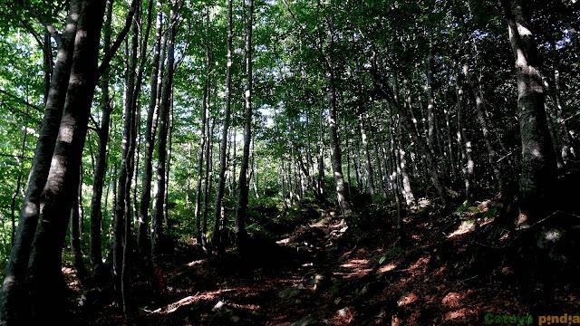 Bosque tupido en la ruta a Castro Valnera
