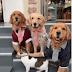 ΒΙΝΤΕΟ: Όταν ο σκύλος έβαλε την γάτα στην θέση της για την οικογενειακή φωτογραφία