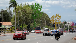 Ceiba treets Nicaragua