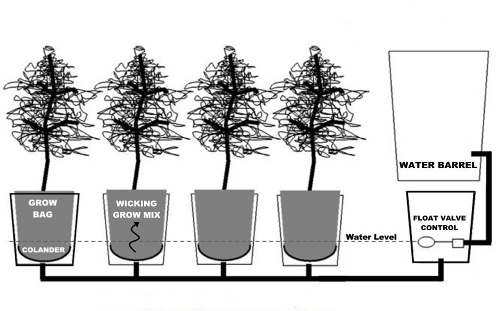 Chennai Hydroponics: Sub-irrigated planter (SIP)