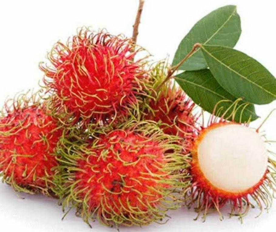 Bibit tanaman buah rambutnya binjai Sumatra Utara