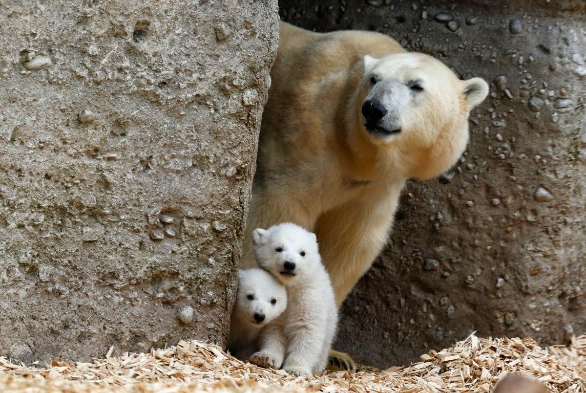 Keepin Babel At Bay 21 Beautiful Photos Of Animal Parents With Their Babies