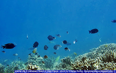 Snorkeling tour with Charles Roring