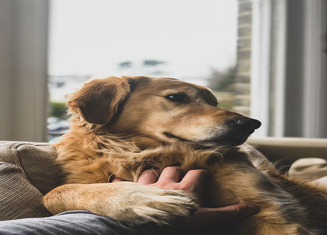 What Pet Insurance Will Benefit You With