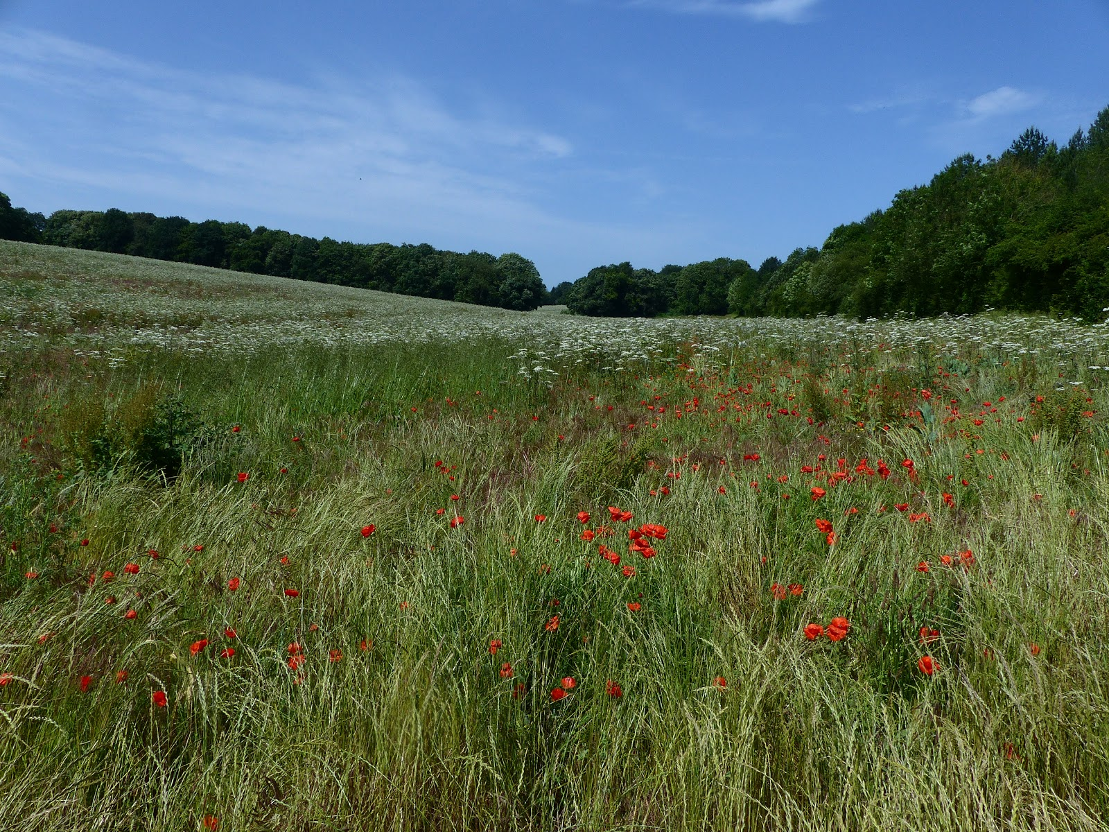 Banstead Botany Blog