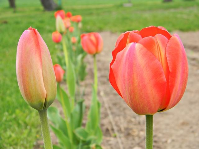 kwiaty, ogród, działka, koło domu