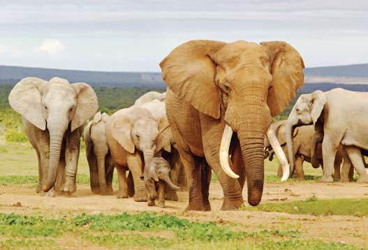 Satwa Liar di Afrika Selatan